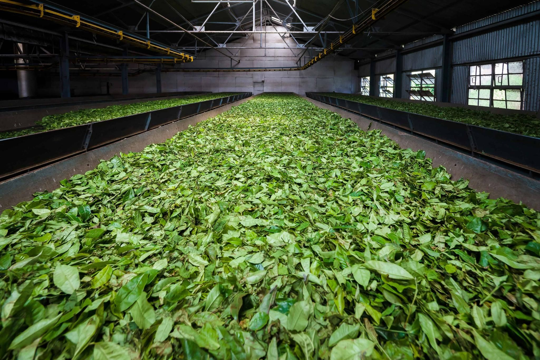 African tea processing industry seeks sustainability and efficiency improvements with DCO Systems