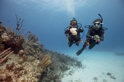 10 Tips for Divers