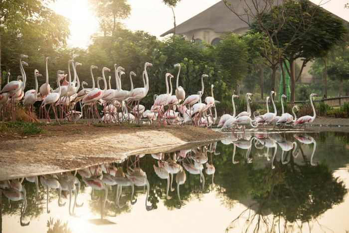 New look Dubai Safari Park to re-open in October as tourism 'gathers pace'