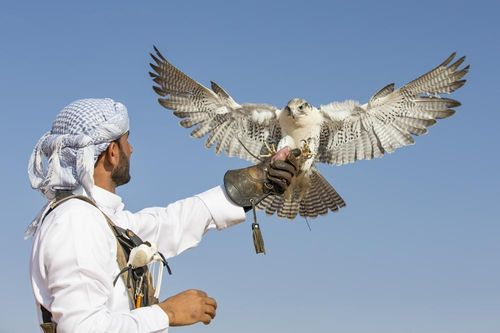 A Brief Look at Falconry