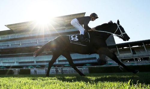 Horse racing getting more TV time with other sports still on hold