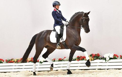 Oldenburg dressage horse tops sale at $594000