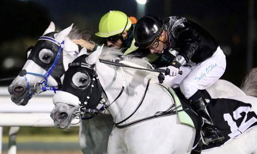 O'Shea quartet dominates Abu Dhabi meet