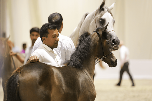 GLOBAL EQUINE INDUSTRY TO CONVERGE AT DUBAI INTERNATIONAL HORSE FAIR