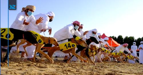 Saluki Championship 2021: UAE's Bedouin dogs put on a show in Dubai