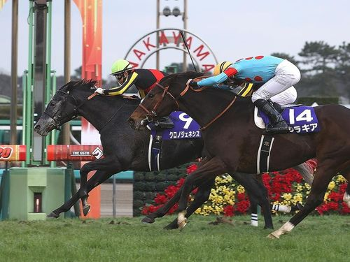 An International Horse Racing Event, Dubai World Cup invites 762 horses from 19 countries