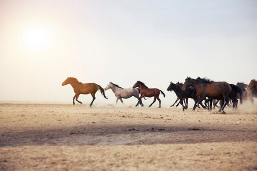 Enforcing Against Horses & Camels in the UAE