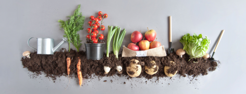 HOW UTILIZING TECHNOLOGY CAN HELP THE ORGANIC FOOD SUPPLY CHAIN MAXIMIZE ITS YIELDS