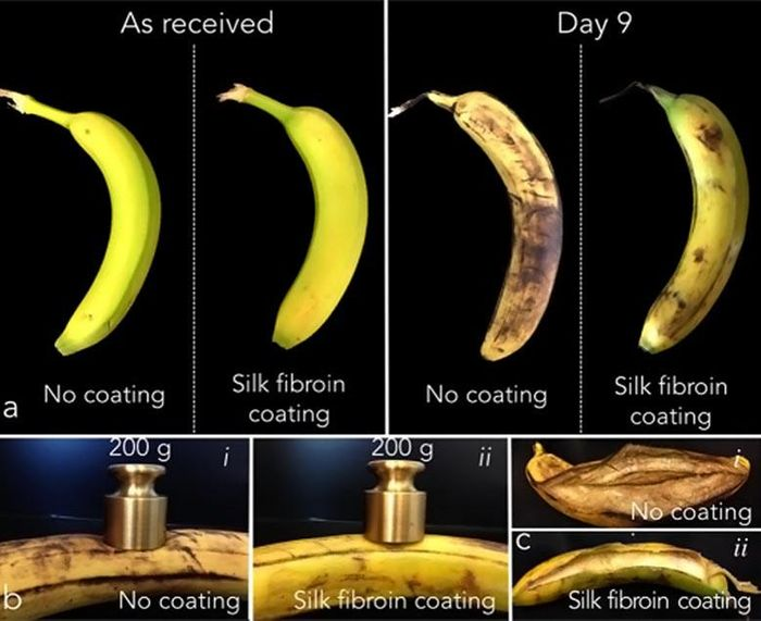 MIT Startup Wraps Food in Edible, Imperceptible Silk Coating for Better Shelf Life