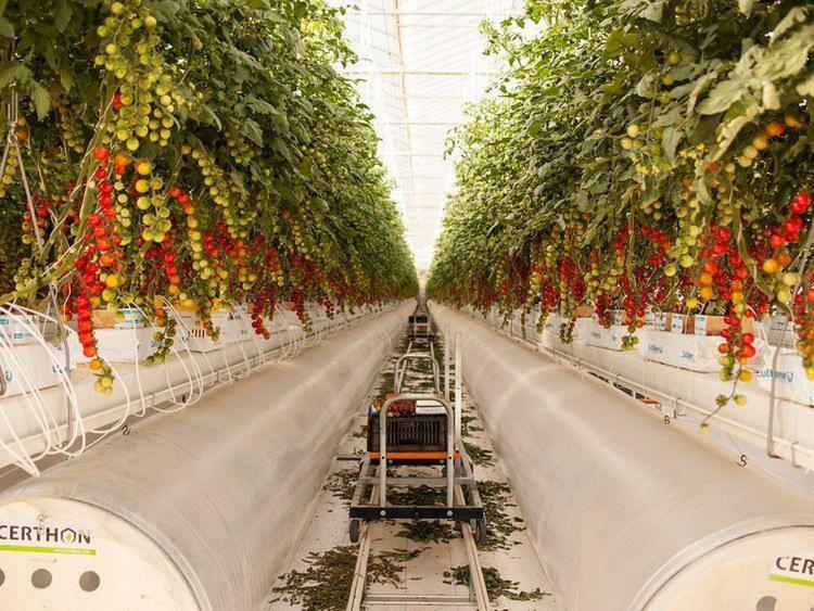 UAE's agri-business firm gets a $100m seeding