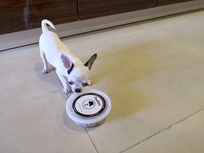 Fresh Meals for Dogs