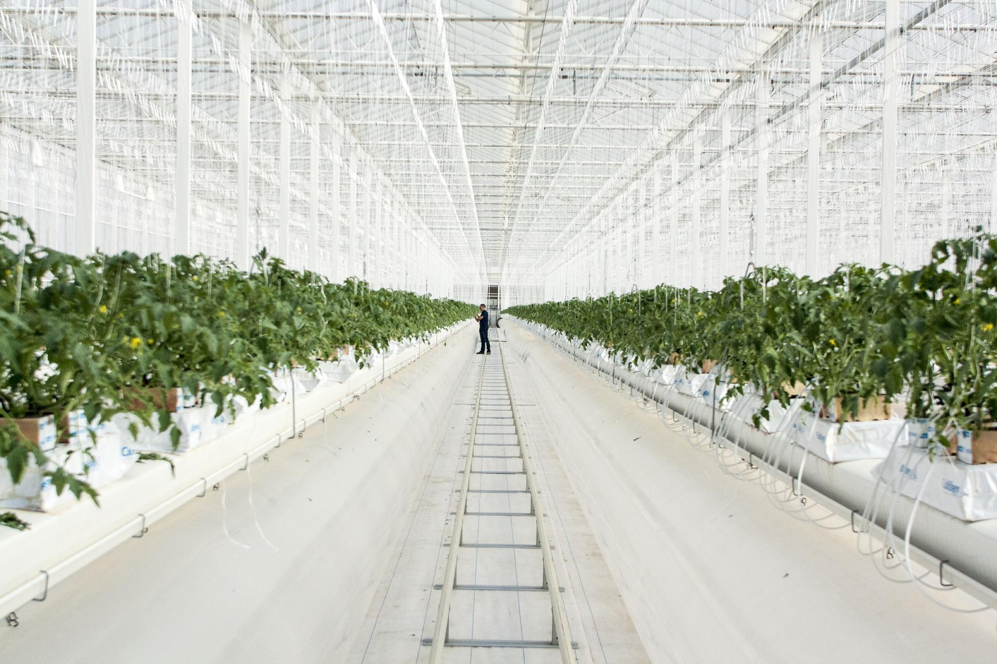 Pure Harvest High-Tech Greenhouse