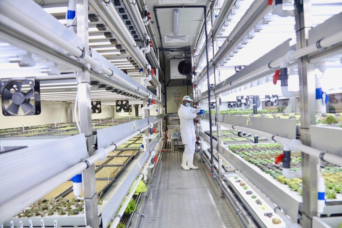 How Majid Al Futtaim Is Raising Food Security In The UAE through Hydroponic Farming