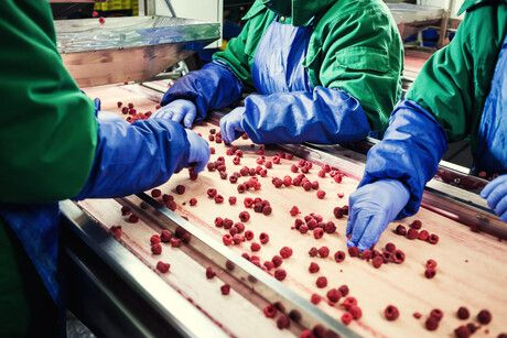 Gloves in the food industry