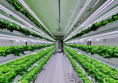 Smart Acres Vertical Farming Company Launch in UAE in 2020