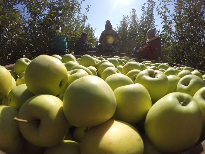 Phoenix Fresh Produce: From the 'farm' to 'you'
