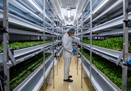 Bright lights on smart farming