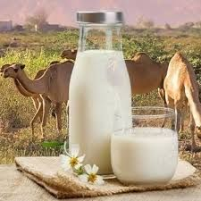 Making camel milk 'safer': Researchers combat E. coli and salmonella with new lactic acid bacteria