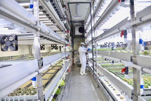 How Majid Al Futtaim Is Raising Food Security In The UAE through Hydroponic Farming