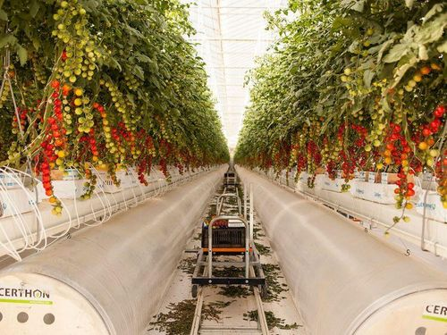 UAE's agri-business firm gets a $100m seeding