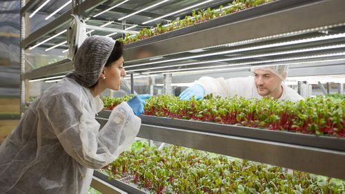 Agtech startup iFarm raises $4M for automated indoor farming