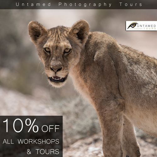 10% off All Wildlife Photography Workshops, Tours & Safaris