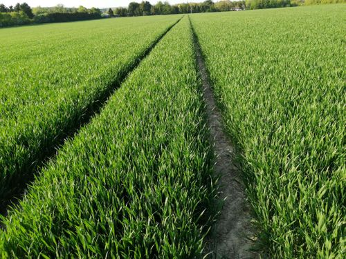 Independent trials reveal yield and efficacy improvements with AminoA Biostimulants applications