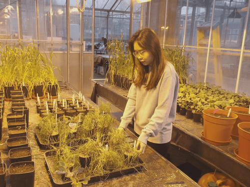 Research student looks at waterproofing crops with rapeseed oil
