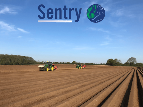 Sentry Seed Potatoes