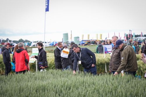 Cereals 2021: A Healthier Path to Profits