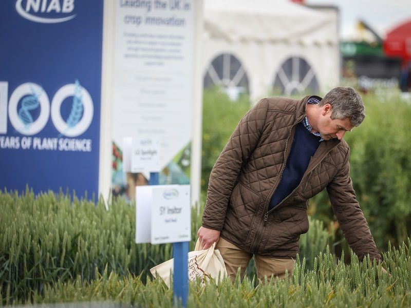 Cereals 2021 returns to Lincolnshire fields