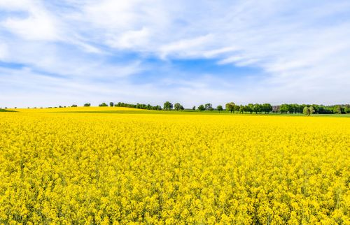 GROUND BREAKING OILSEED RAPE HERBICIDE SET FOR CEREALS LAUNCH