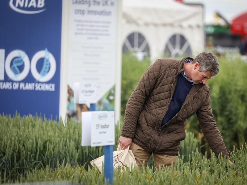 Check out the latest crop varieties at Cereals LIVE