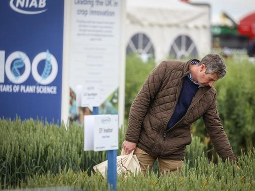 Boost your soil health with Cereals LIVE