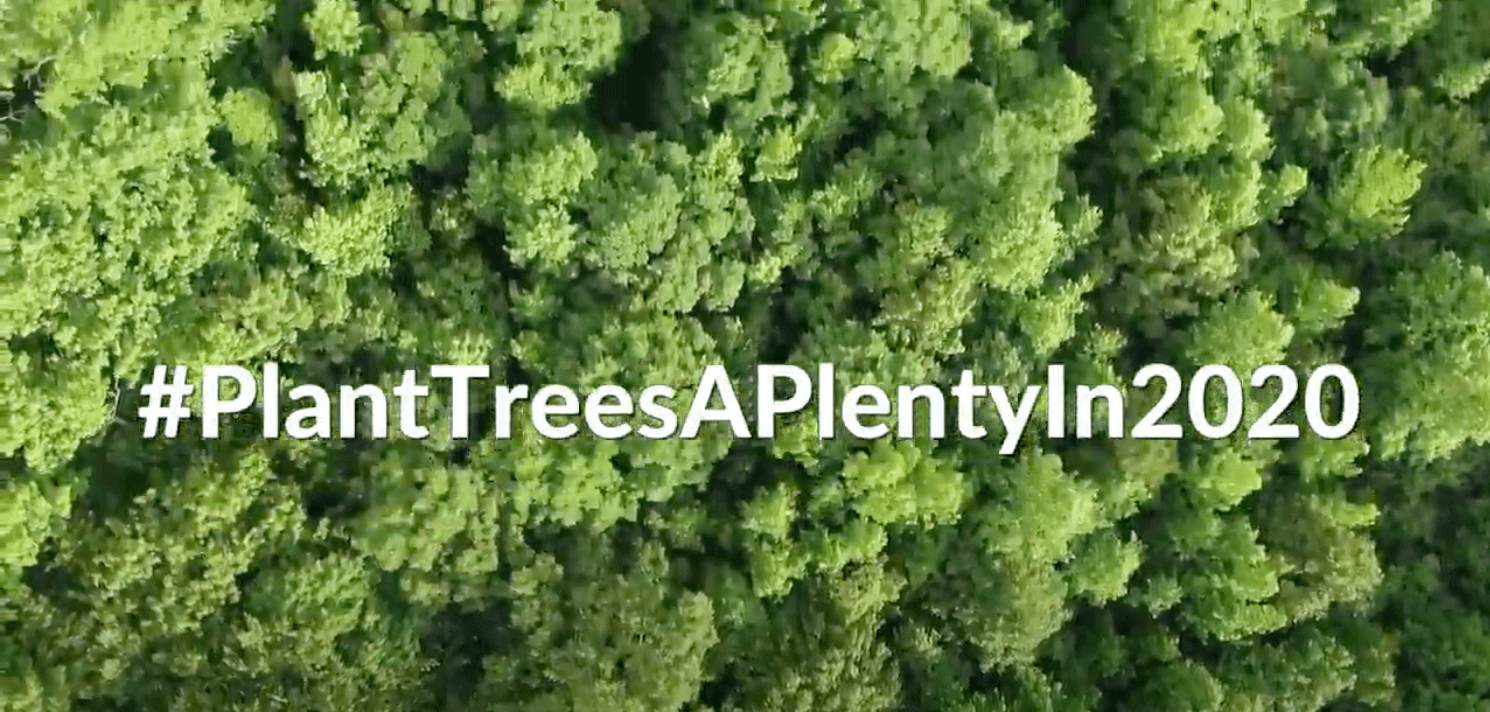 #PlantTreesAPlentyIn2020 Woodland Creation with Tilhill