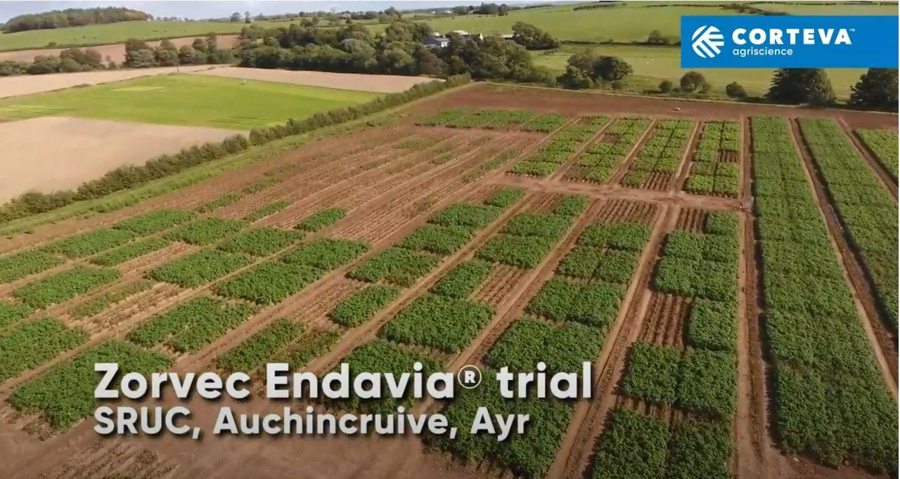 Zorvec Endavia® Efficacy vs Late Blight (P.infestans) in Potato