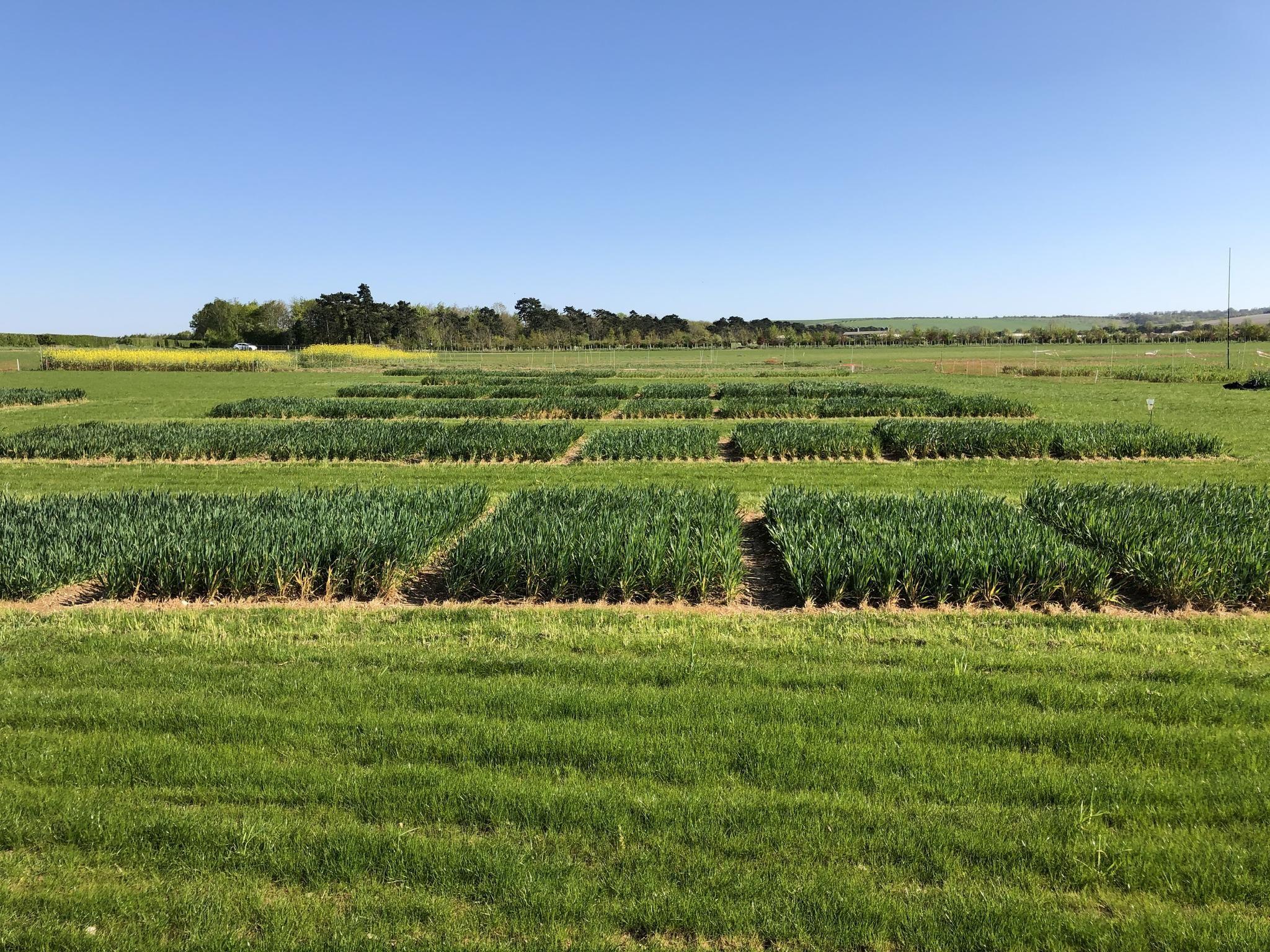 niab crops