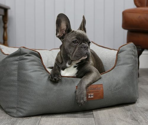 Contemporary Dog Bedding Collection