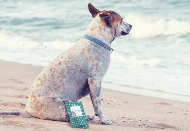 Goodchap's – The Plastic-Free Dog Brand