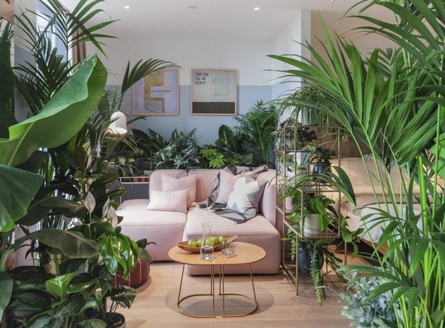 Introducing the UK's First Jungle Hotel Suites