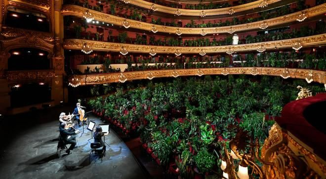 Barcelona opera house reopens with a live audience of 2,292 plants