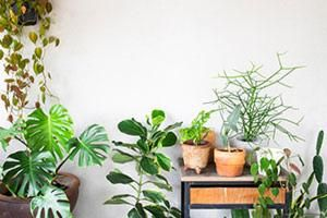2019 was the Year of the Houseplant says GCA