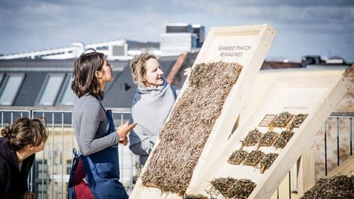 Viking-style seaweed thatch updated into prefab panelling | Construction Buzz #226