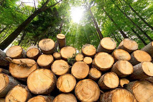 Australia Facing Timber Shortage Amid Home-Renovation Boom