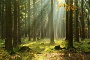 Can forest therapy enhance health and well-being?