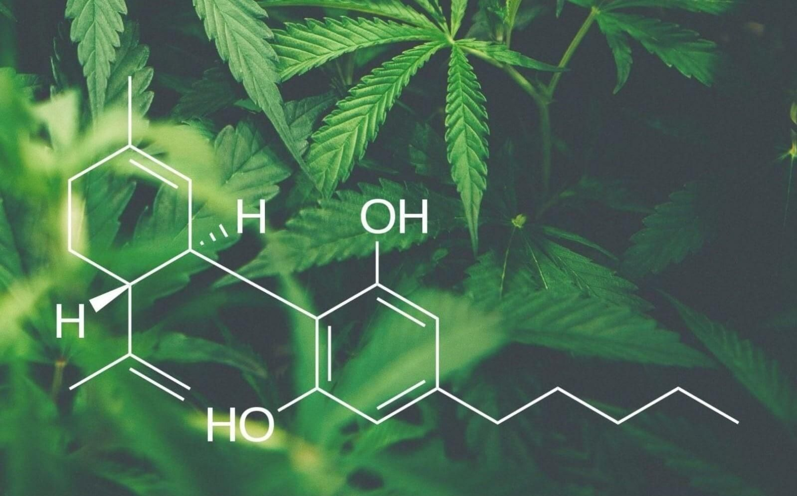 CBD oil formula on a leafy background.