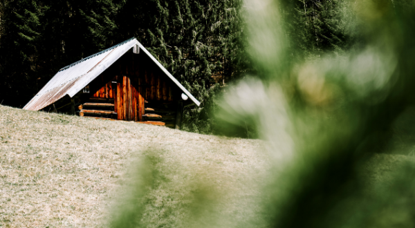 Picture of a wooden cabin in a forest.