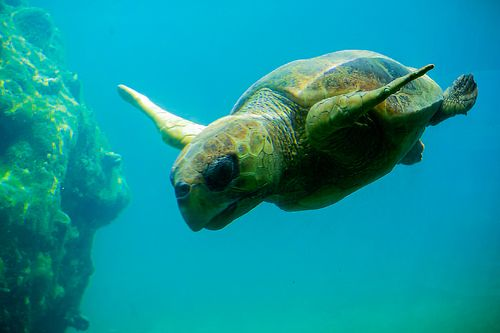 Fighting for Survival: WWF World Sea Turtle Day and the Importance of Removing Plastic from Our Oceans