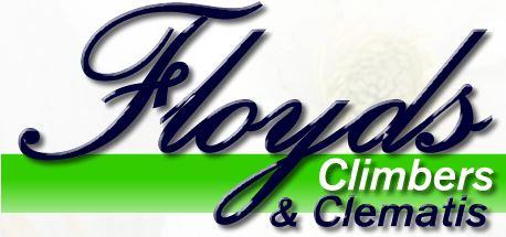 Floyds Climbers & Clematis