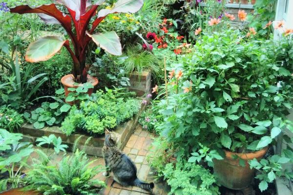 Chris-and-Rachel-Wilkins-every-space-counts-competition-bbc2-gardeners-world